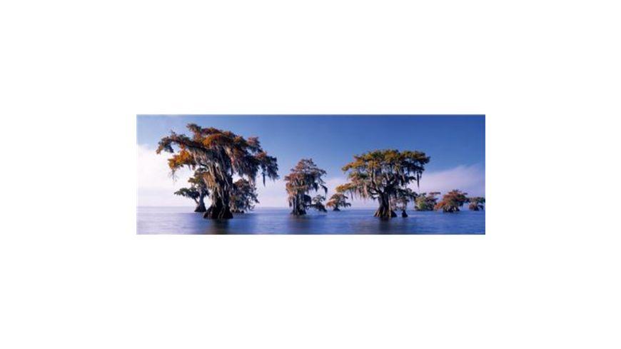 Heye Panoramapuzzle 1000 Teile Alexander von Humboldt Bald Cypresses