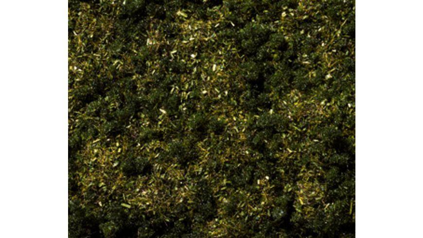 Noch Waldboden Gras