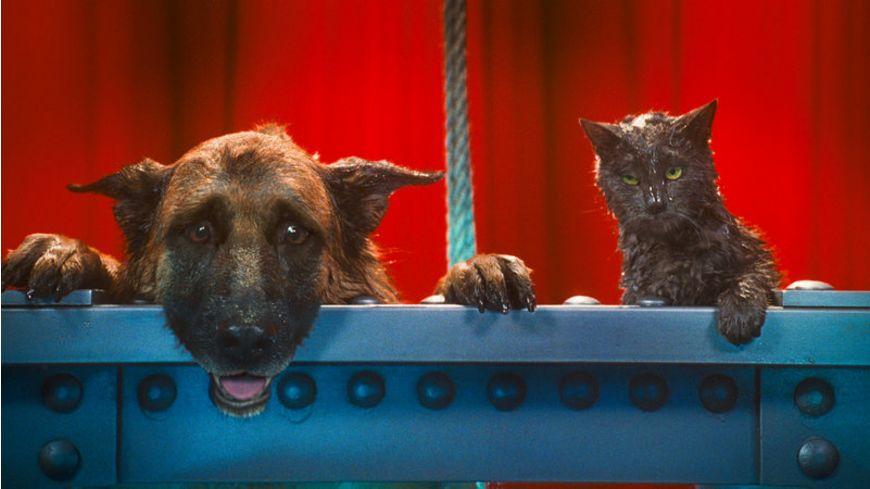 Cats Dogs Die Rache der Kitty Kahlohr Blu ray inkl Digital Copy
