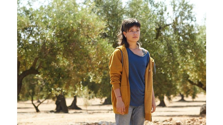 El Olivo Der Olivenbaum