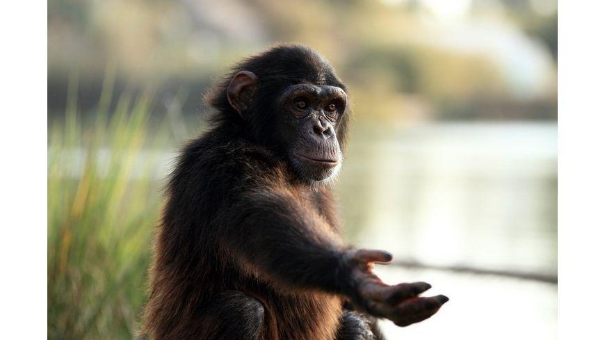 The Wonder of Animals Tierische Ueberlebenskuenstler 2 DVDs