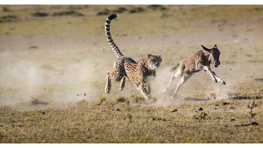 Die Jagd Auf Leben und Tod 2 BRs