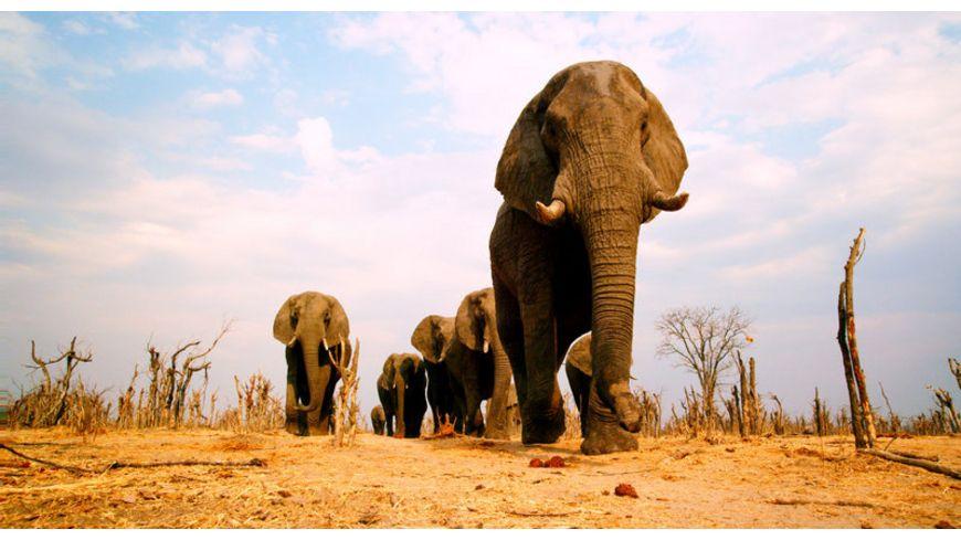 Afrika Das magische Koenigreich Blu ray