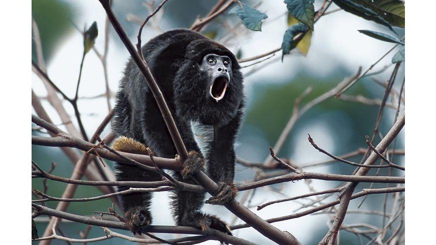 Amazonia Abenteuer im Regenwald inkl 2D Version