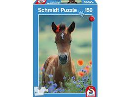 Schmidt Spiele Kinderpuzzle Mein liebes Fohlen 150 Teile