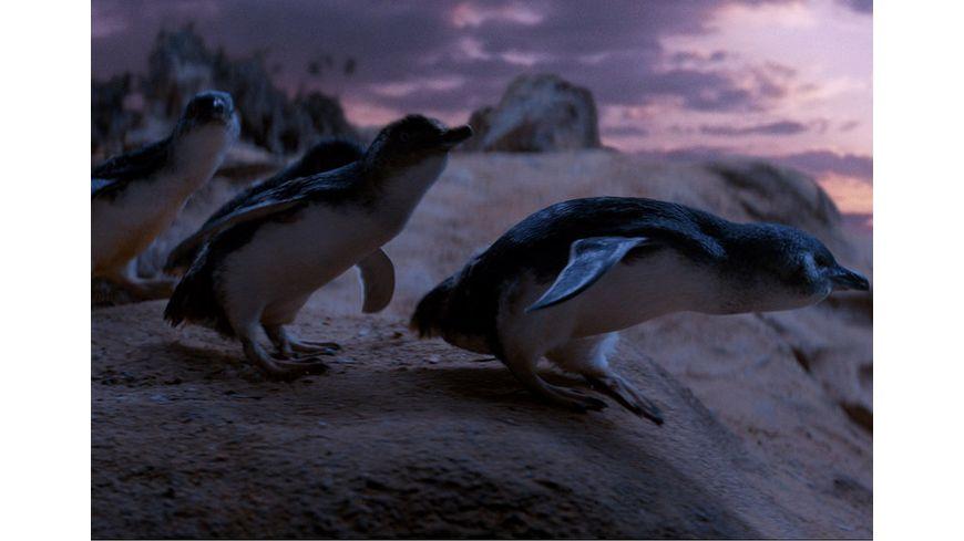 Oddball Retter der Pinguine