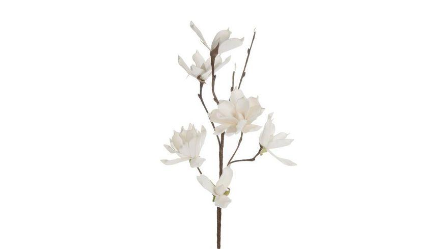 DIJK Schaumblume Magnolia Weiss