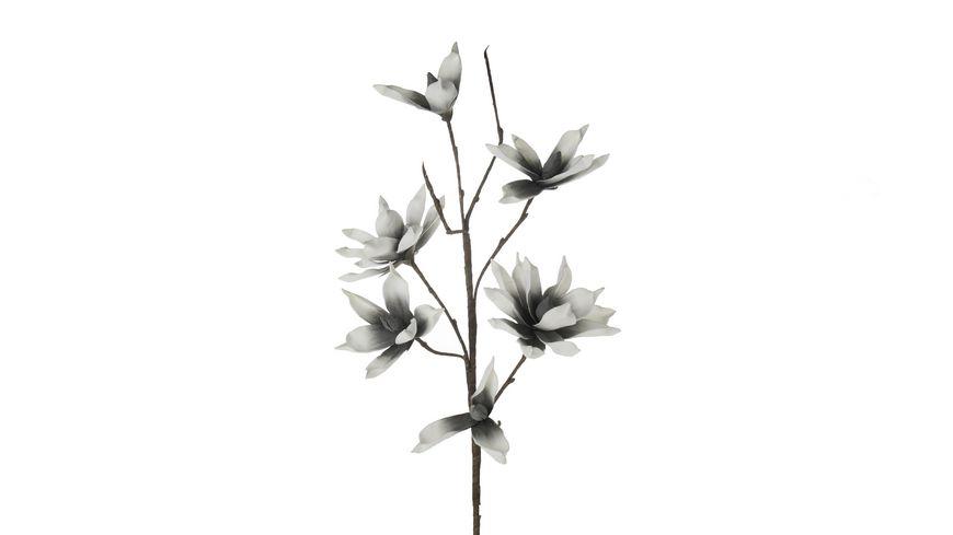 DIJK Schaumblume Magnolia Grau Weiss