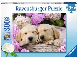 Ravensburger Puzzle Suesse Hunde im Koerbchen 300 Teile XXL