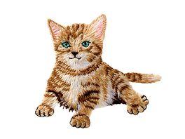 Mono Quick Buegelmotiv Babykatze