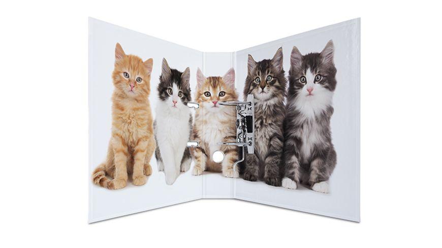 HERMA Motiv Ordner A4 breit Katzen