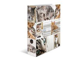 HERMA Ordner A4 breit Katzen
