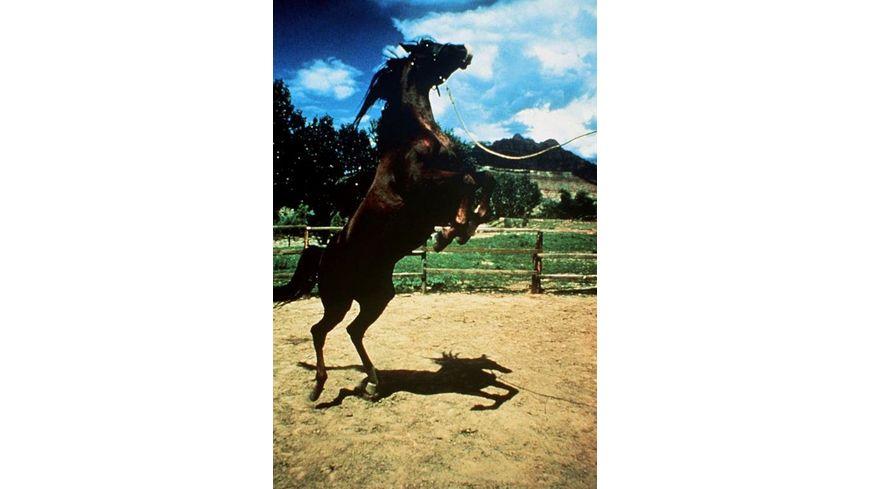 Pferdeglueck Wunderschoene Pferde Spielfilme 4 DVDs