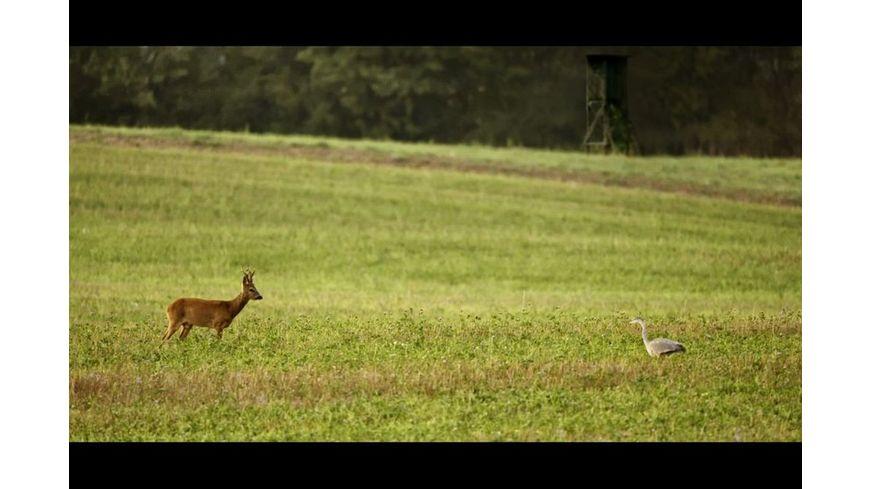 Auf der Jagd Wem gehoert die Natur
