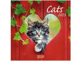 Cats 2022 Broschuerenkalender mit Ferienterminen
