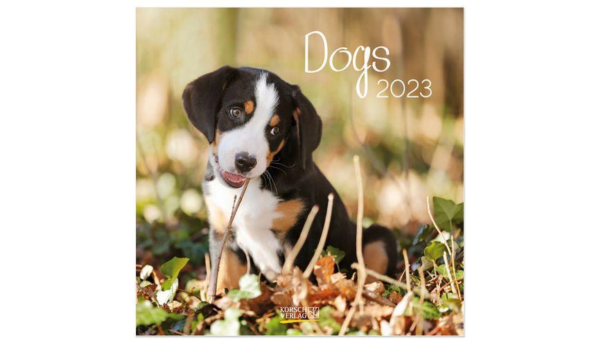Dogs 2019 Broschuerenkalender mit Ferienterminen
