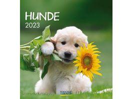 Hunde 2019 aufstellbarer Postkartenkalender
