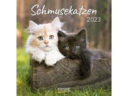 Schmusekatzen 2021 Postkartenkalender