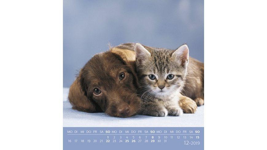 Tierfreundschaften 2019 Postkartenkalender