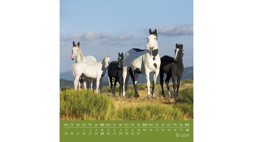Traumpferde 2019 Postkartenkalender