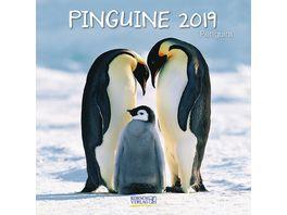 Pinguine 2019 Broschuerenkalender