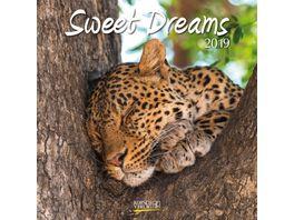 Sweet Dreams 2019 Broschuerenkalender