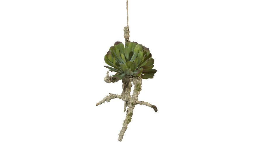 Asia Hängeast mit Sukkulenten 23 x 19 cm