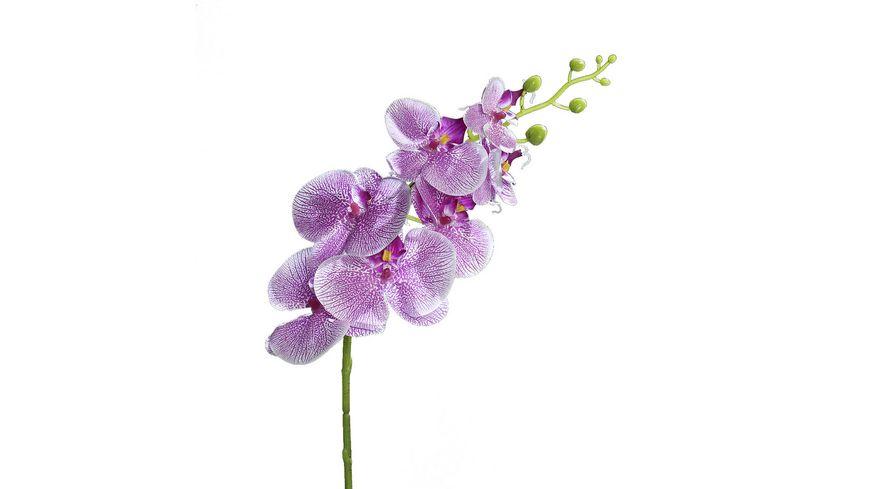 Orchidee Phalaenopsis, 83 cm