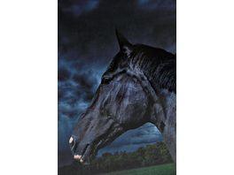 Vokabelheft A5 Pferde 2019 sortiert