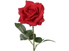Rose rot 68 cm