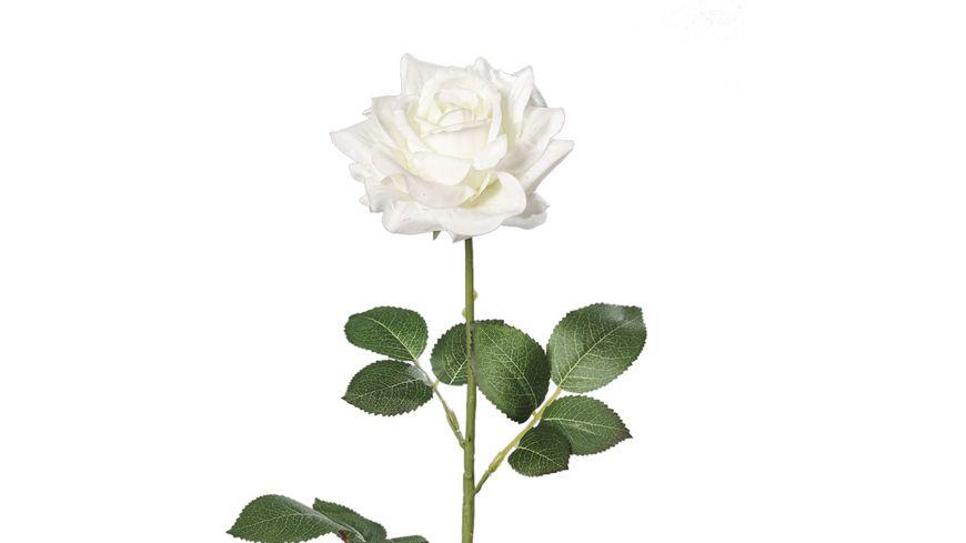 Rose crème-weiß, 68 cm,