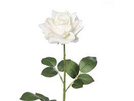 Rose creme weiss 68 cm