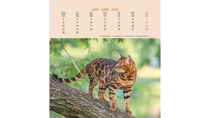 Postkartenkalender 2020 Schmusekatzen 16 x 17cm