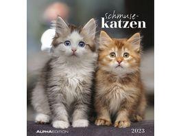 Postkartenkalender 2021 Schmusekatzen 16 x 17cm
