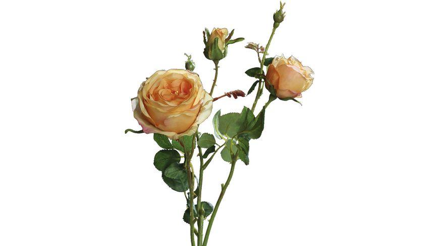 Rose mit 2 gelben Knospen, 60 cm