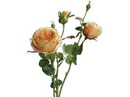 Rose mit 2 gelben Knospen 60 cm