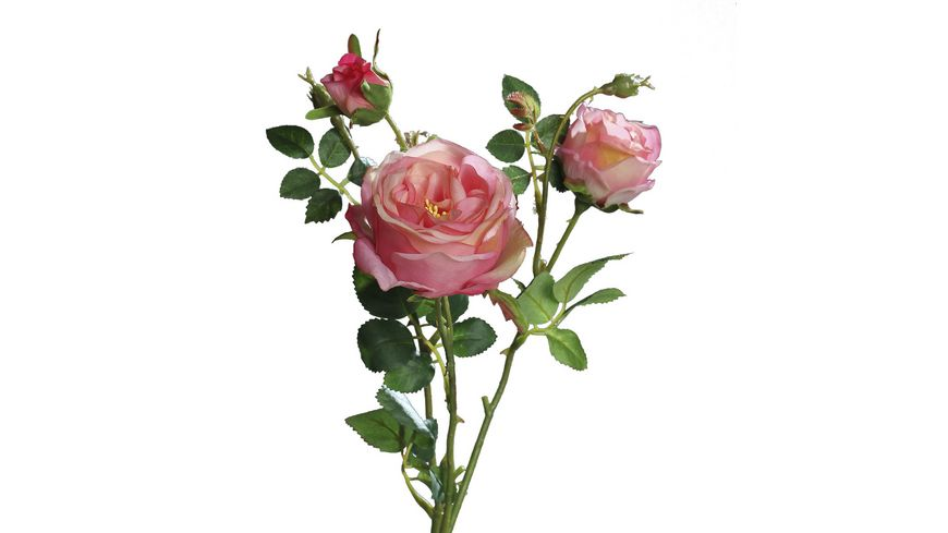 Rose  mit 2 rosa Knospen, 60 cm