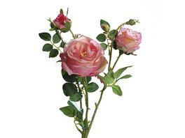 Rose mit 2 rosa Knospen 60 cm