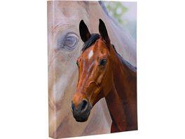 Heftbox A4 Pferde sortiert