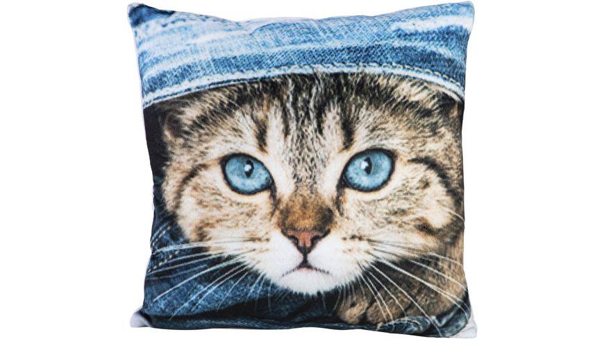 Stuco Dekokissen Fotodruck Design Katze