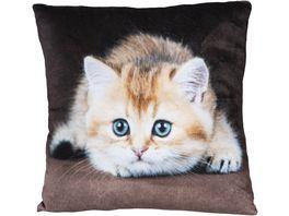 Stuco Fotodruck Dekokissen Design Katze