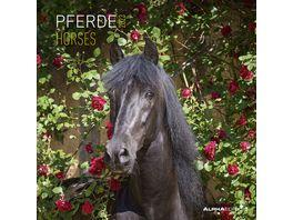 Pferde 2021 A I 30x31cm