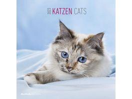 Katzen 2021 A I 30x31cm