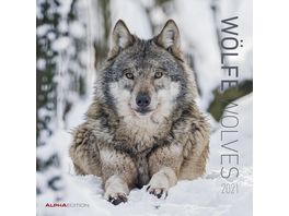 Alpha Edition Bildkalender Woelfe 2021 30x30cm