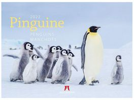 Alpha Edition Bildkalender Pinguine 2021