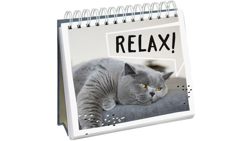 Cat philosophy Entdecke die Katze in dir