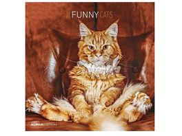 Funny Cats 2021 A I 30x31cm