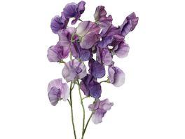 Wickenbund lavendel purpur 45cm