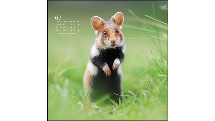 Wandkalender mit Spiralbindung Sag es durch die Blume 2021 Hamster Eichhoernchen Zwiesel in Nahaufnahme 24x24cm
