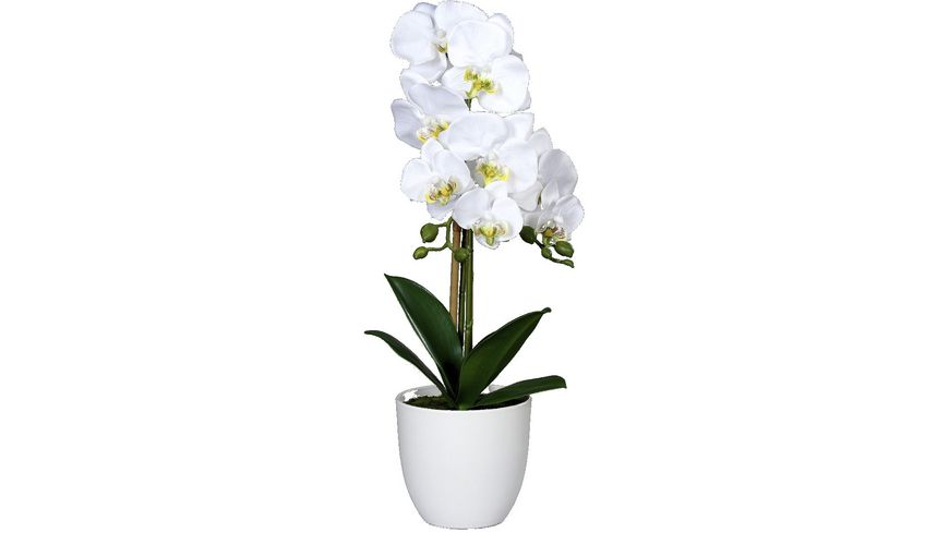 Orchidee, 53cm